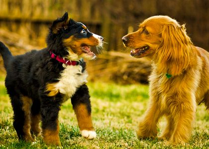 Socializing a new Puppy