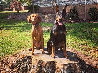 off leash dogs